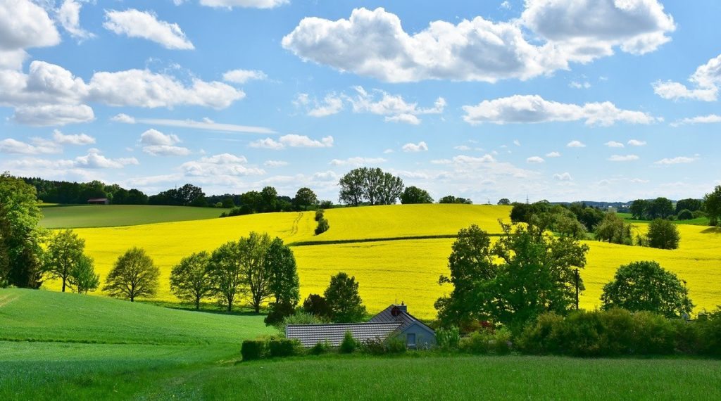 landscape, nature, oilseed rape